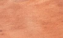 ostindische Pflaume